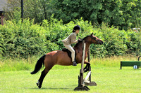 Working Hunter / Riding club horse